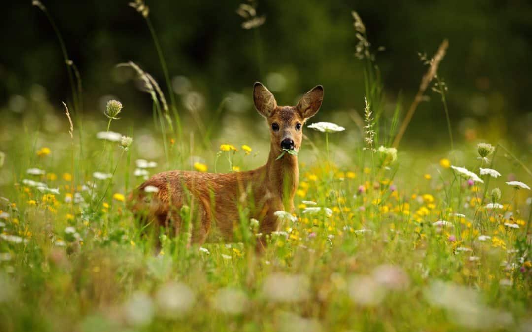 Ist die Jagdausbildung das Richtige für mich?