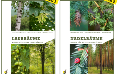 Prüfungsvorbereitung: Bäume erkennen